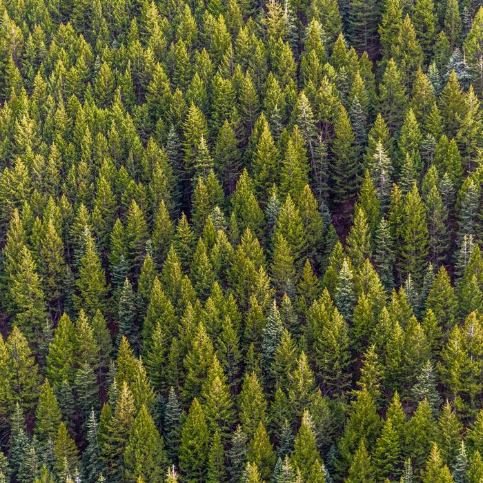 Industria celulosa - agrícola - forestal